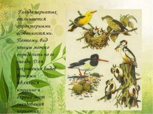 Гнезда пернатых отличаются характерными особенностями. Поэтому, вид птицы мо
