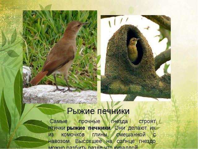 Рыжие печники Самые прочные гнезда строят птичкирыжие печники. Они делают и...