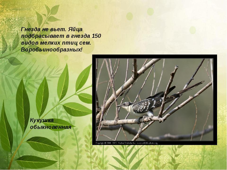 Гнезда не вьет. Яйца подбрасывает в гнезда 150 видов мелких птиц сем. Воробьи...