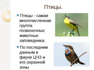 Птицы. Птицы - самая многочисленная группа позвоночных животных заповедника.