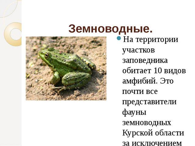 Земноводные. На территории участков заповедника обитает 10 видов амфибий. Эт...