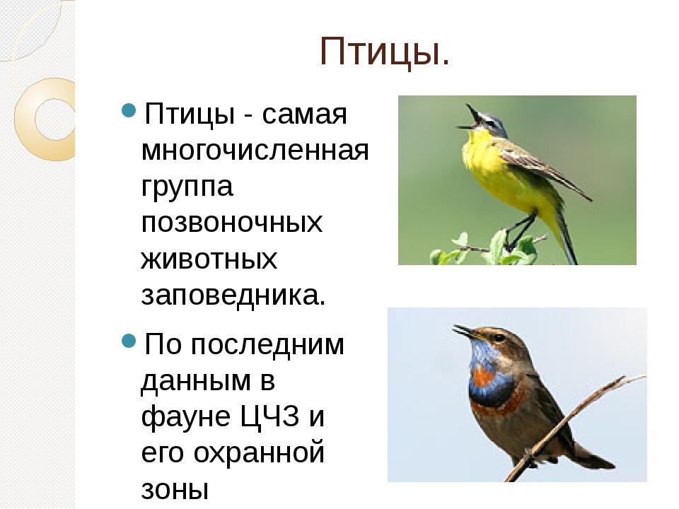 Птицы. Птицы - самая многочисленная группа позвоночных животных заповедника....
