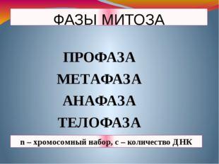 ФАЗЫ МИТОЗА ПРОФАЗА МЕТАФАЗА АНАФАЗА ТЕЛОФАЗА n – хромосомный набор, с – коли