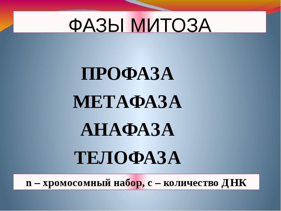 ФАЗЫ МИТОЗА ПРОФАЗА МЕТАФАЗА АНАФАЗА ТЕЛОФАЗА n – хромосомный набор, с – коли...