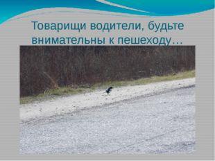 Товарищи водители, будьте внимательны к пешеходу…