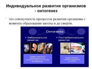 Индивидуальное развитие организмов - онтогенез это совокупность процессов раз