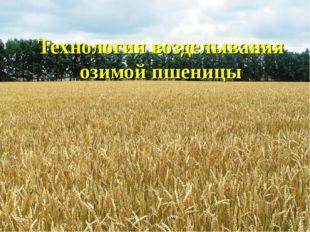 Технология возделывания озимой пшеницы