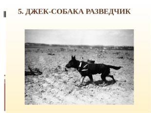 5. ДЖЕК-СОБАКА РАЗВЕДЧИК