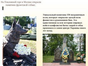 На Поклонной горе в Москве открыли памятник фронтовой собаке. Уникальный пам