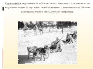 Ездовые собаки, подвозившие на небольших телегах боеприпасы и увозившие на н