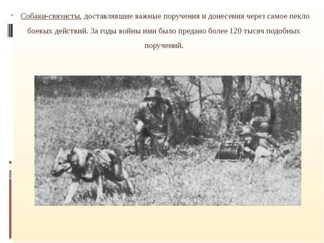 Собаки-связисты, доставлявшие важные поручения и донесения через самое пекло...