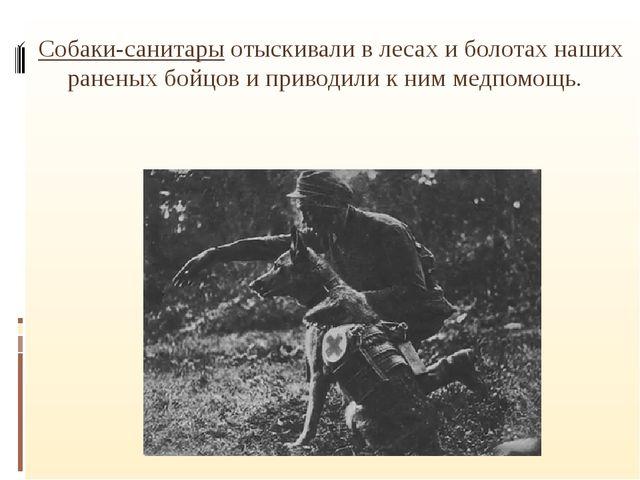 Собаки-санитары отыскивали в лесах и болотах наших раненых бойцов и приводил...