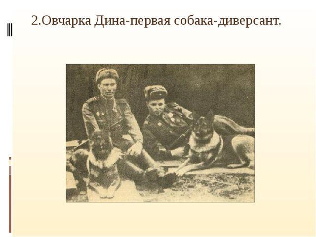 2.Овчарка Дина-первая собака-диверсант.