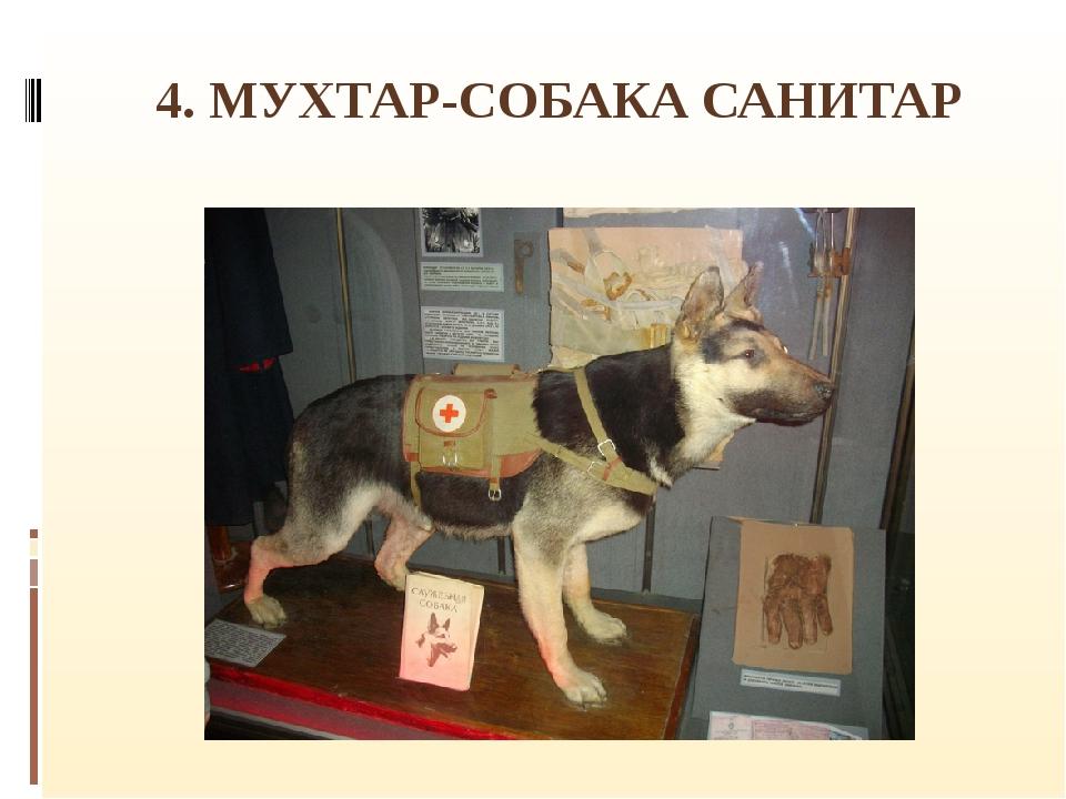 4. МУХТАР-СОБАКА САНИТАР