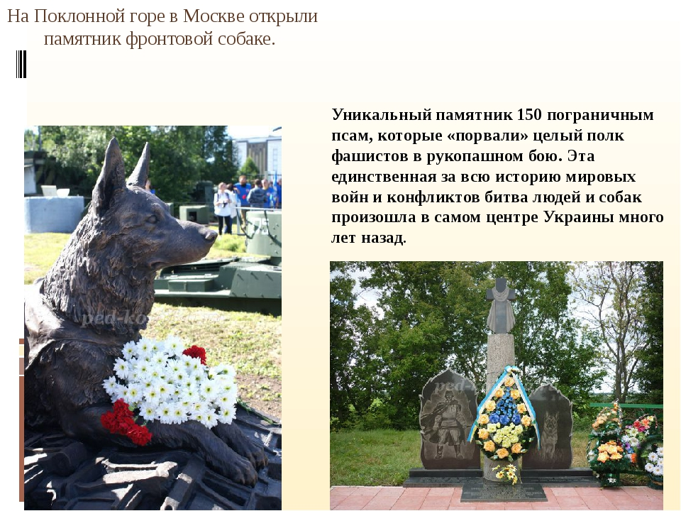 На Поклонной горе в Москве открыли памятник фронтовой собаке. Уникальный пам...