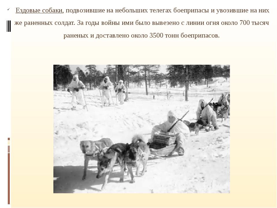 Ездовые собаки, подвозившие на небольших телегах боеприпасы и увозившие на н...