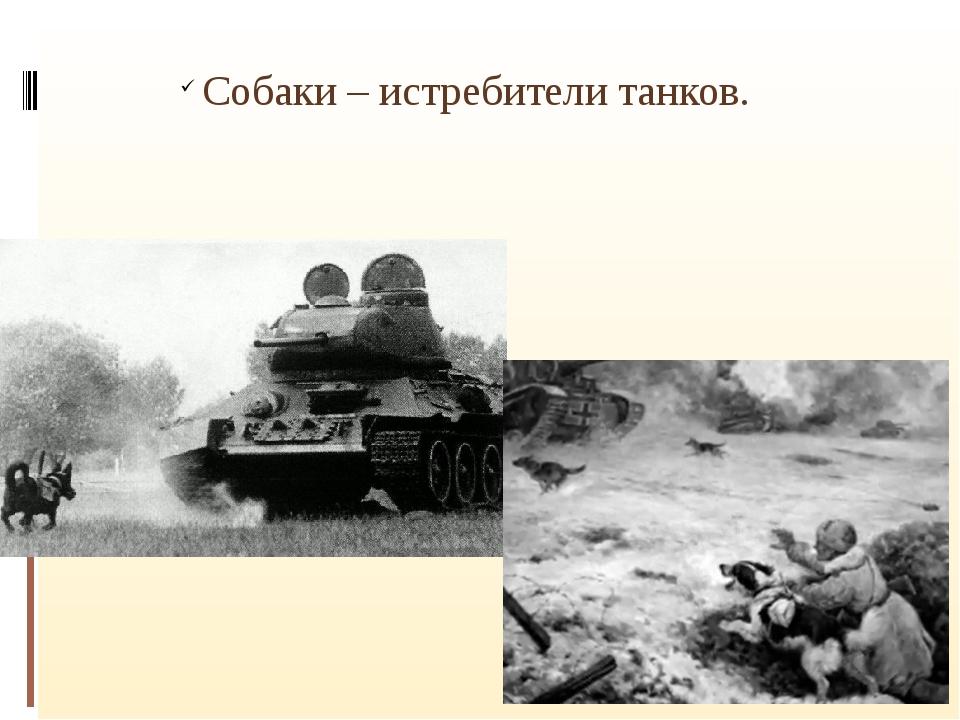 Собаки – истребители танков.