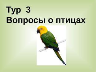 Тур 3 Вопросы о птицах