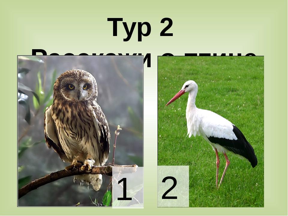 Тур 2 Расскажи о птице 1 2