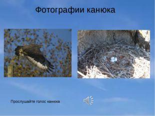 Фотографии канюка Прослушайте голос канюка