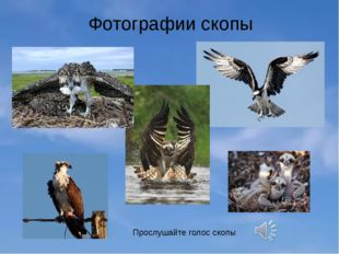 Фотографии скопы Прослушайте голос скопы