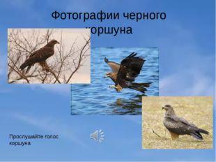 Фотографии черного коршуна Прослушайте голос коршуна