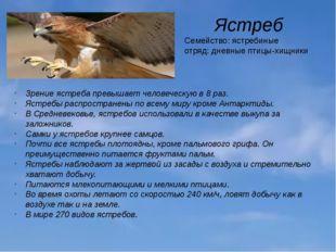 Ястреб Семейство: ястребиные отряд: дневные птицы-хищники Зрение ястреба прев