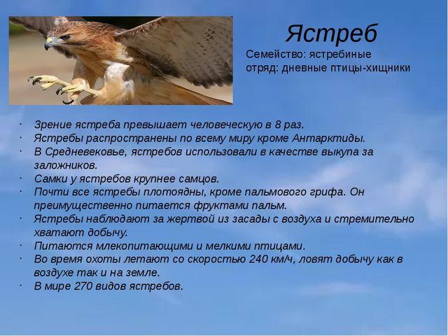 Ястреб Семейство: ястребиные отряд: дневные птицы-хищники Зрение ястреба прев...