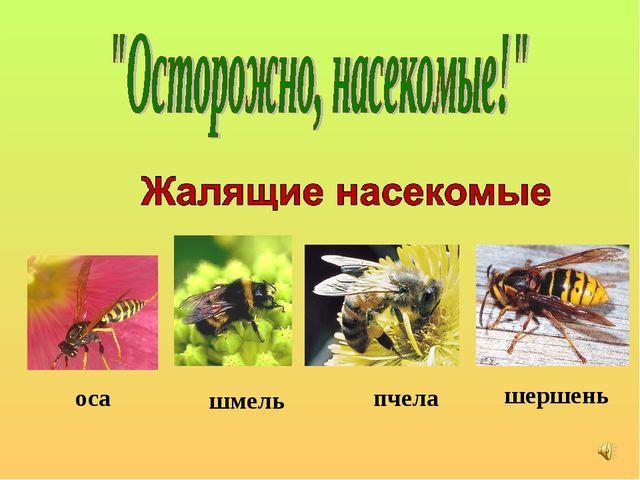пчела шмель оса шершень