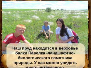 Наш пруд находится в верховье балки Павелка -ландшафтно-биологического памятн
