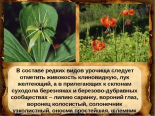 В составе редких видов урочища следует отметить живокость клиновидную, лук ж