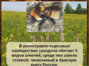 В разнотравно-тырсовых сообществах суходола обитает 5 видов шмелей, среди них