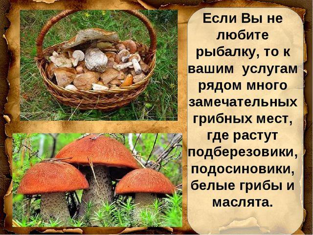 Если Вы не любите рыбалку, то к вашим услугам рядом много замечательных грибн...