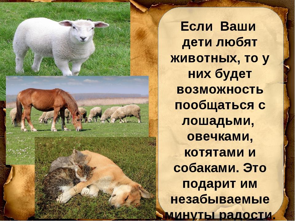 Если Ваши дети любят животных, то у них будет возможность пообщаться с лошадь...