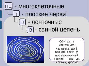 ПЦ - многоклеточные Т - плоские черви К - ленточные В - свиной цепень Обитае