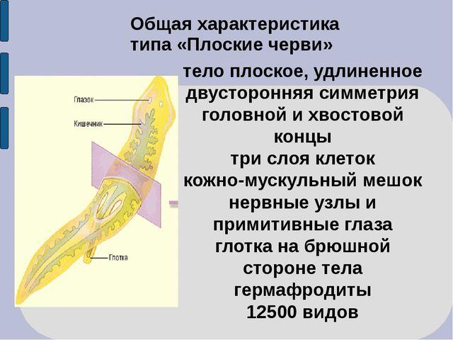 Общая характеристика типа «Плоские черви» тело плоское, удлиненное двусторонн...