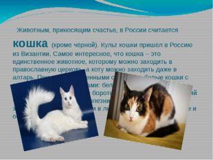 Животным, приносящим счастье, в России считается кошка (кроме чёрной). Культ