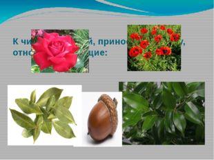 К числу растений, приносящих удачу, относят следующие: