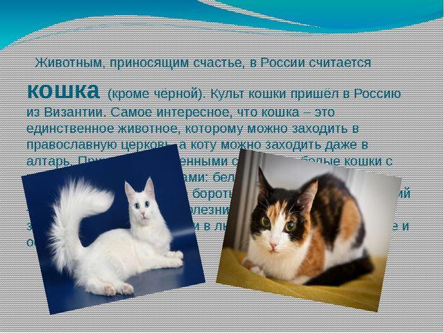 Животным, приносящим счастье, в России считается кошка (кроме чёрной). Культ...