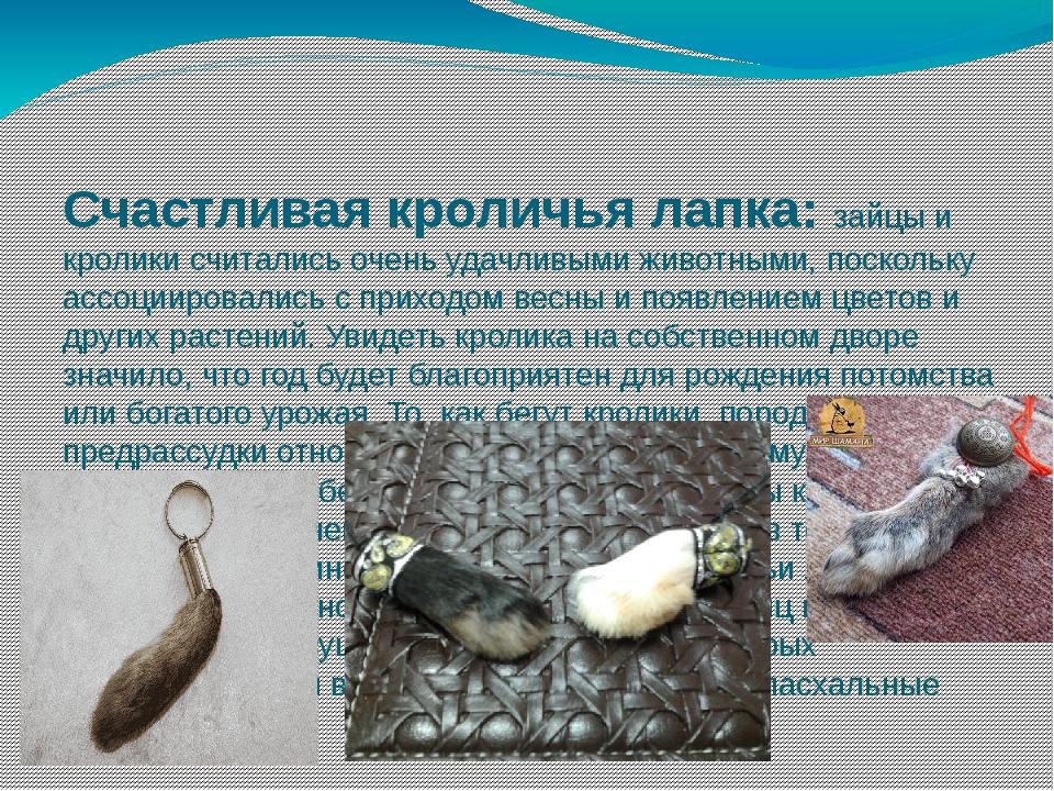 Счастливая кроличья лапка: зайцы и кролики считались очень удачливыми живот...