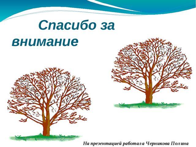 Спасибо за внимание На презентацией работала Черникова Полина