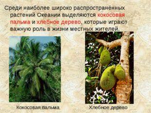 Кокосовая пальма Хлебное дерево Среди наиболее широко распространённых растен