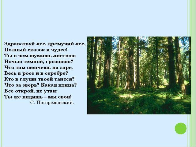 Здравствуй лес, дремучий лес, Полный сказок и чудес! Ты о чем шумишь листвою...