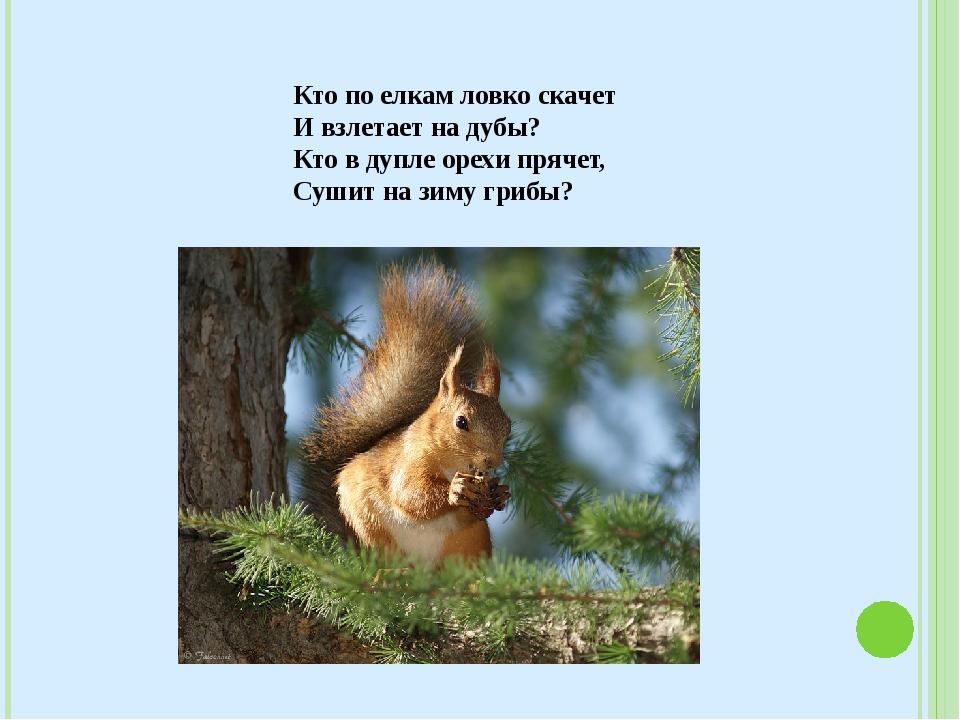 Кто по елкам ловко скачет И взлетает на дубы? Кто в дупле орехи прячет, Суши...