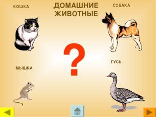 КОШКА СОБАКА МЫШКА ГУСЬ ? ДОМАШНИЕ ЖИВОТНЫЕ