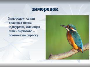 зимородок Зимородок- самая красивая птица Удмуртии, имеющая сине- бирюзово –