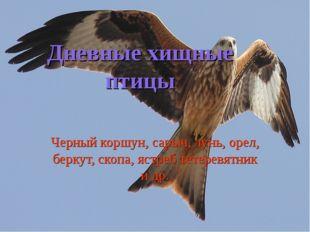 Дневные хищные птицы Черный коршун, сарыч, лунь, орел, беркут, скопа, ястреб