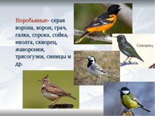 Воробьиные- серая ворона, ворон, грач, галка, сорока, сойка, иволга, скворец