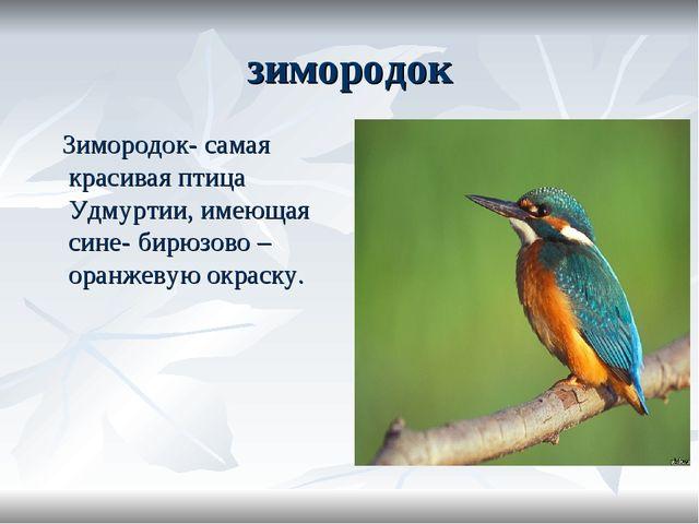 зимородок Зимородок- самая красивая птица Удмуртии, имеющая сине- бирюзово –...