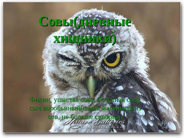 Совы(дневные хищники) Филин, ушастая сова, болотная сова, сыч воробьиный(сама...